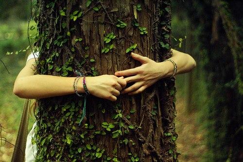 treehealing